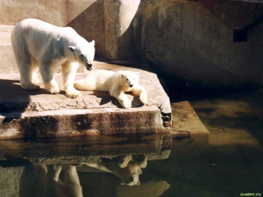 Animals Beasts 048