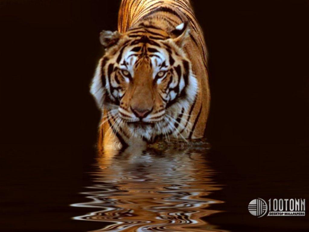 Animals Beasts 072