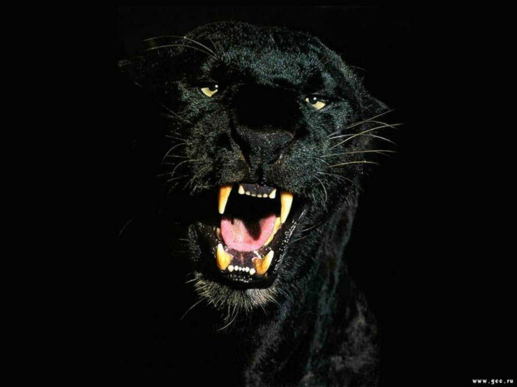 Animals Beasts 076