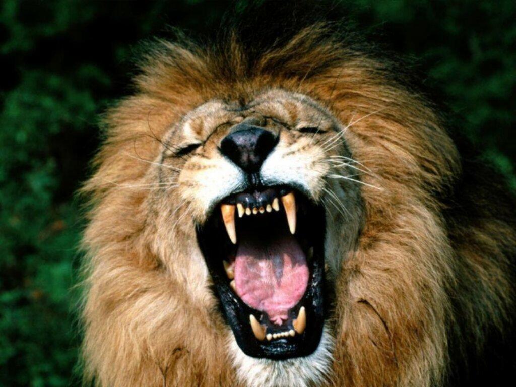 Animals Beasts 047