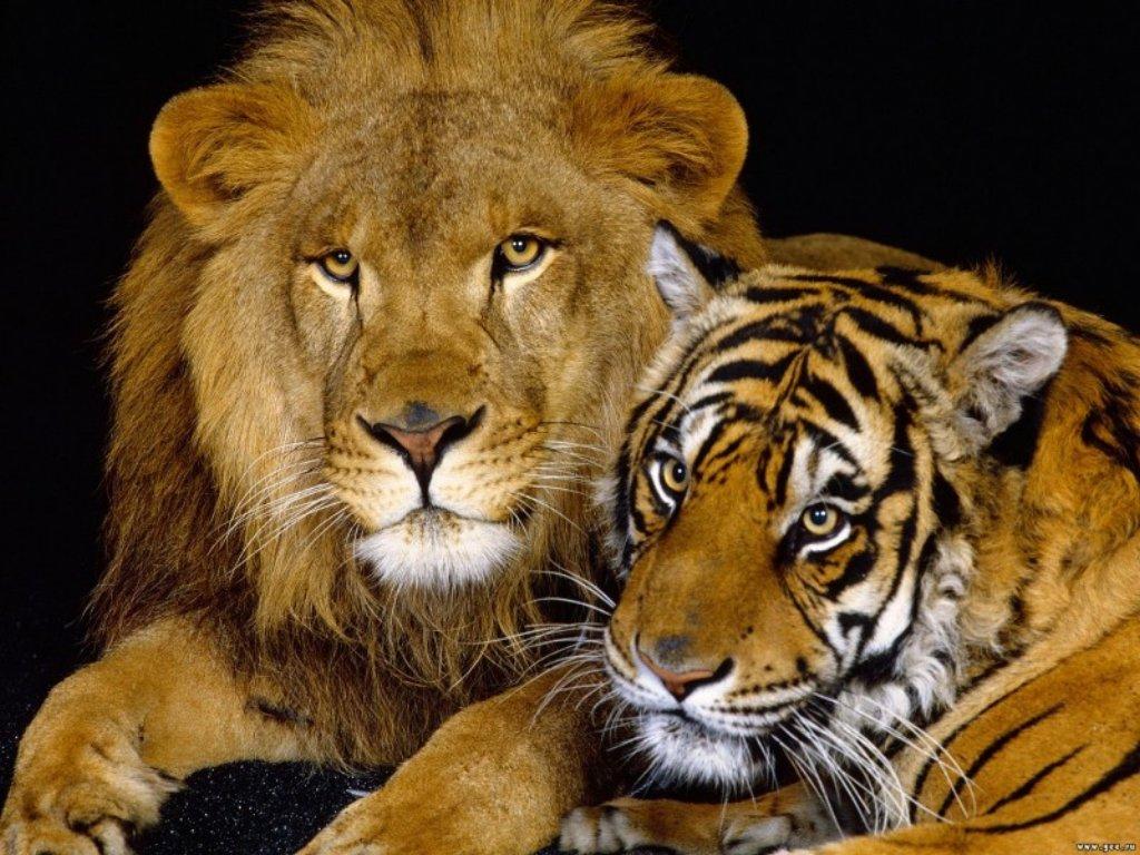 Animals Beasts 042