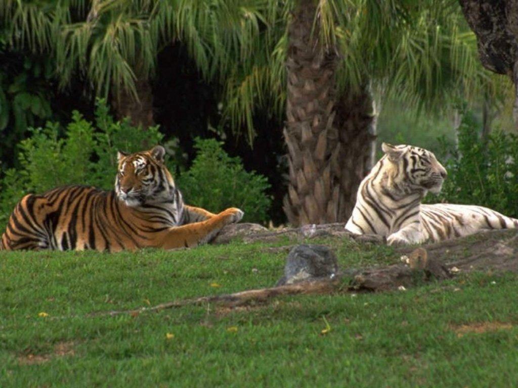 Animals Beasts 051