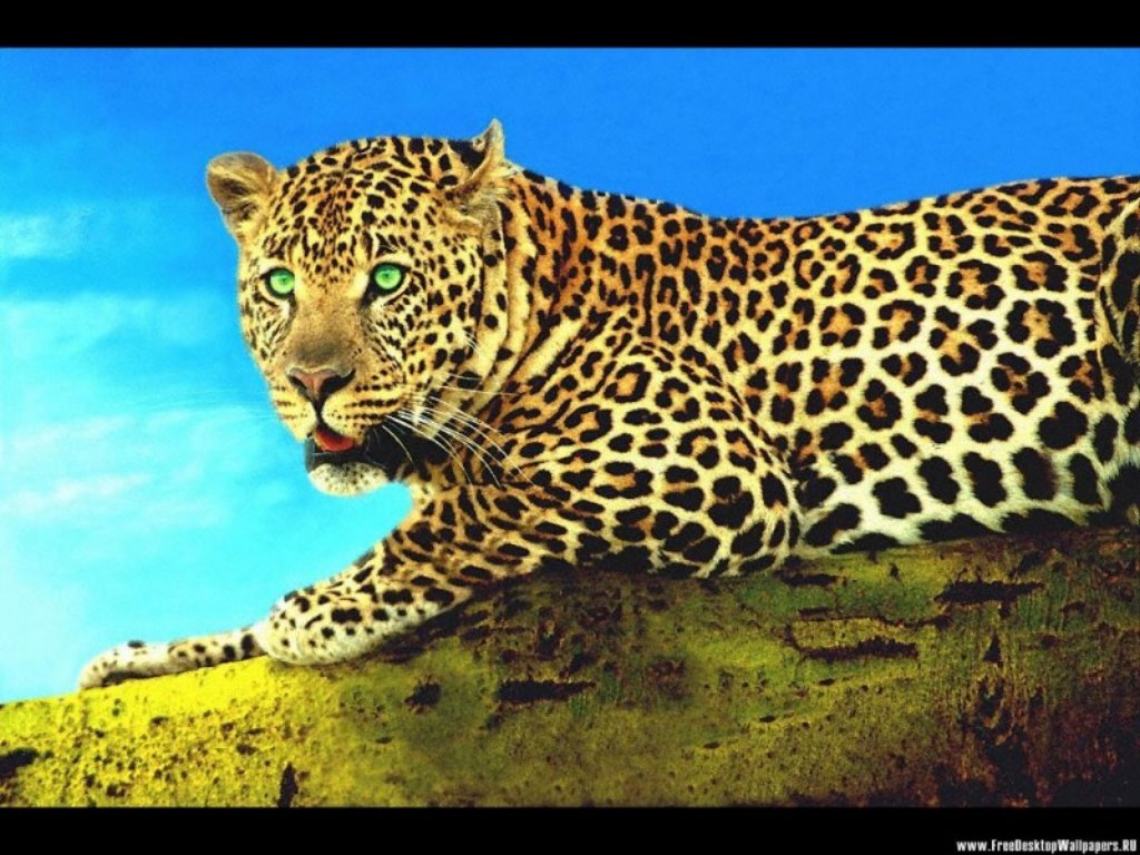 Animals Beasts 026