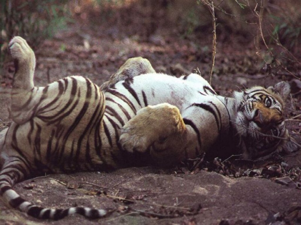 Animals Beasts 017