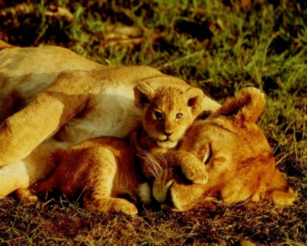 Animals Beasts 015