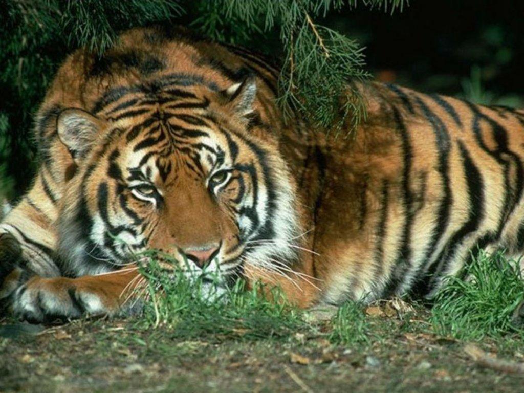 Animals Beasts 052