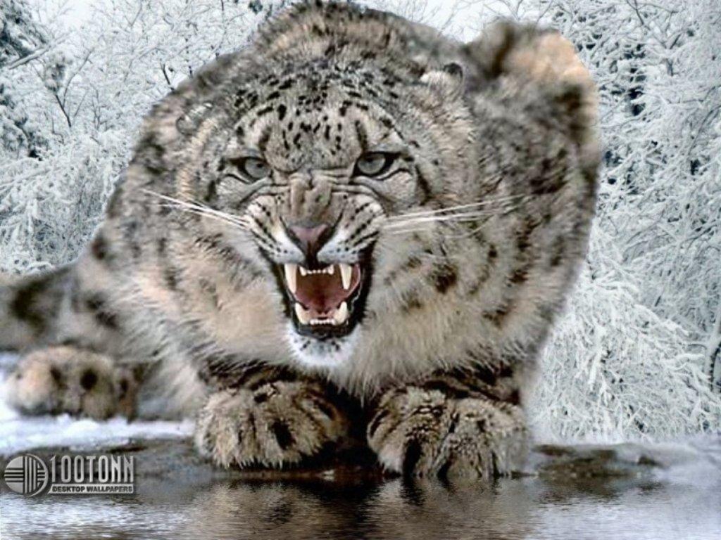 Animals Beasts 059