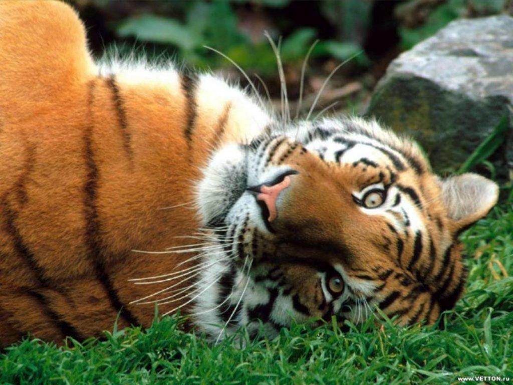 Animals Beasts 056